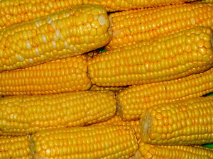 High Fructose Corn Syrup - A killer from the cob